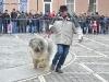 stagiu_psihologie_canina_codlea (12)