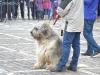 stagiu_psihologie_canina_codlea (13)