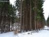 drumuri forestiere (6)