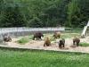 Gradina zoologica-Codlea-Info.ro