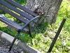 veverite codlea (1)