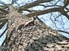 veverite codlea (10)