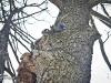 veverite codlea (11)