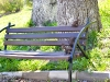 veverite codlea (4)