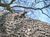 veverite codlea (8)