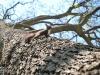 veverite codlea (9)