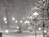 codlea iarna 2011 (9).jpg