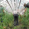 Lucrator in cultura plantelor