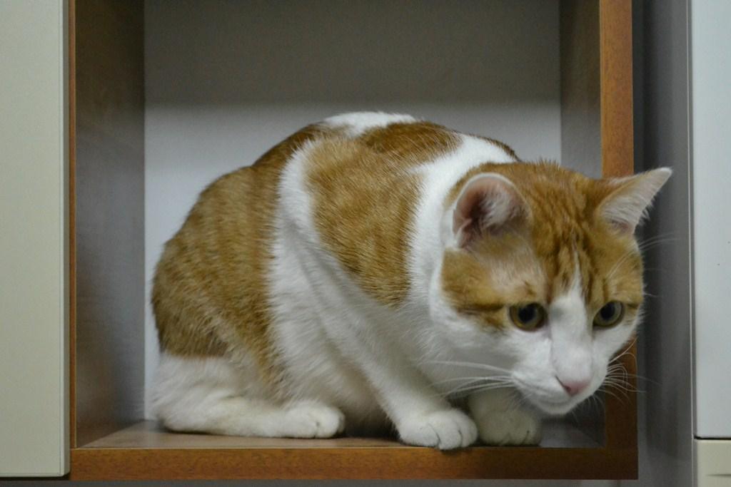 pisici de valentines - codlea info