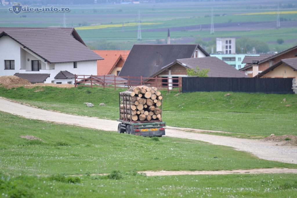 taieri lemn din padurile codlei (2)