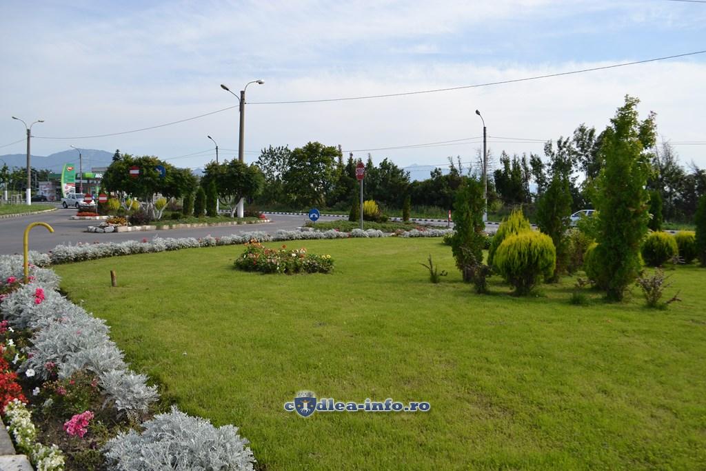 Imagini zona verde municipiul codlea (3)
