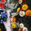 floraria_mariana_codlea (2)