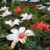 floraria_mariana_codlea (3)